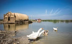 En Irak, les marais misent sur l'écotourisme pour redevenir jardin d'Eden  dans - ECLAIRAGE - REFLEXION a3