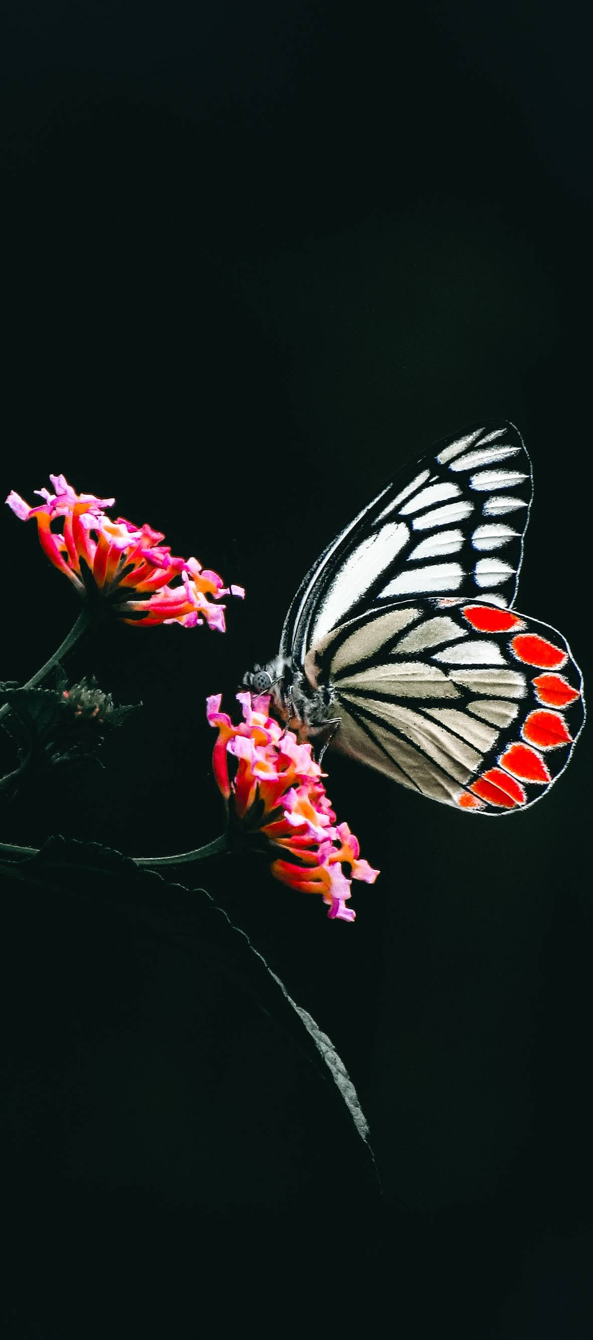 A butterfly pollinating a flower.