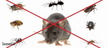 شركة مكافحة حشرات بجنوب جدة , البق,الصراصير,النمل