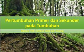 Pertumbuhan Primer dan Sekunder pada Tumbuhan, Daerah Titik Tumbuh Akar dan Batang