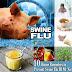 Swine Flu se bachne ke asardar gharelu nuskhe aur upay.