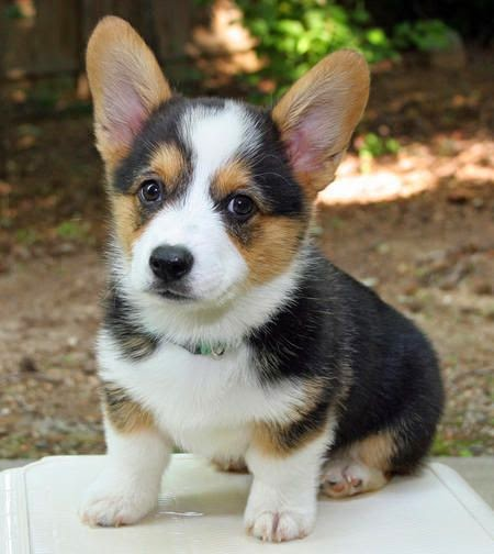 Cute Puppy And Dog 5 Of The Best Dog Breeds For Children And Small Kids