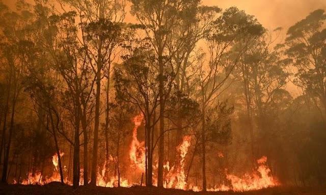 Especies amenazadas pierden buena parte del hábitat por fuegos en el Amazonas