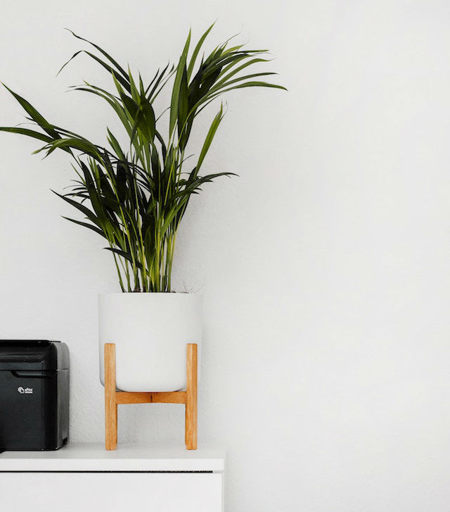 10 trucos para decorar tu hogar en invierno por menos de 100€, decorar con plantas