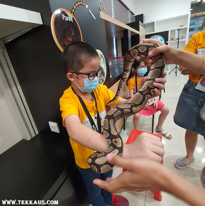 Fun Hour at Entopia Penang-Ball Python