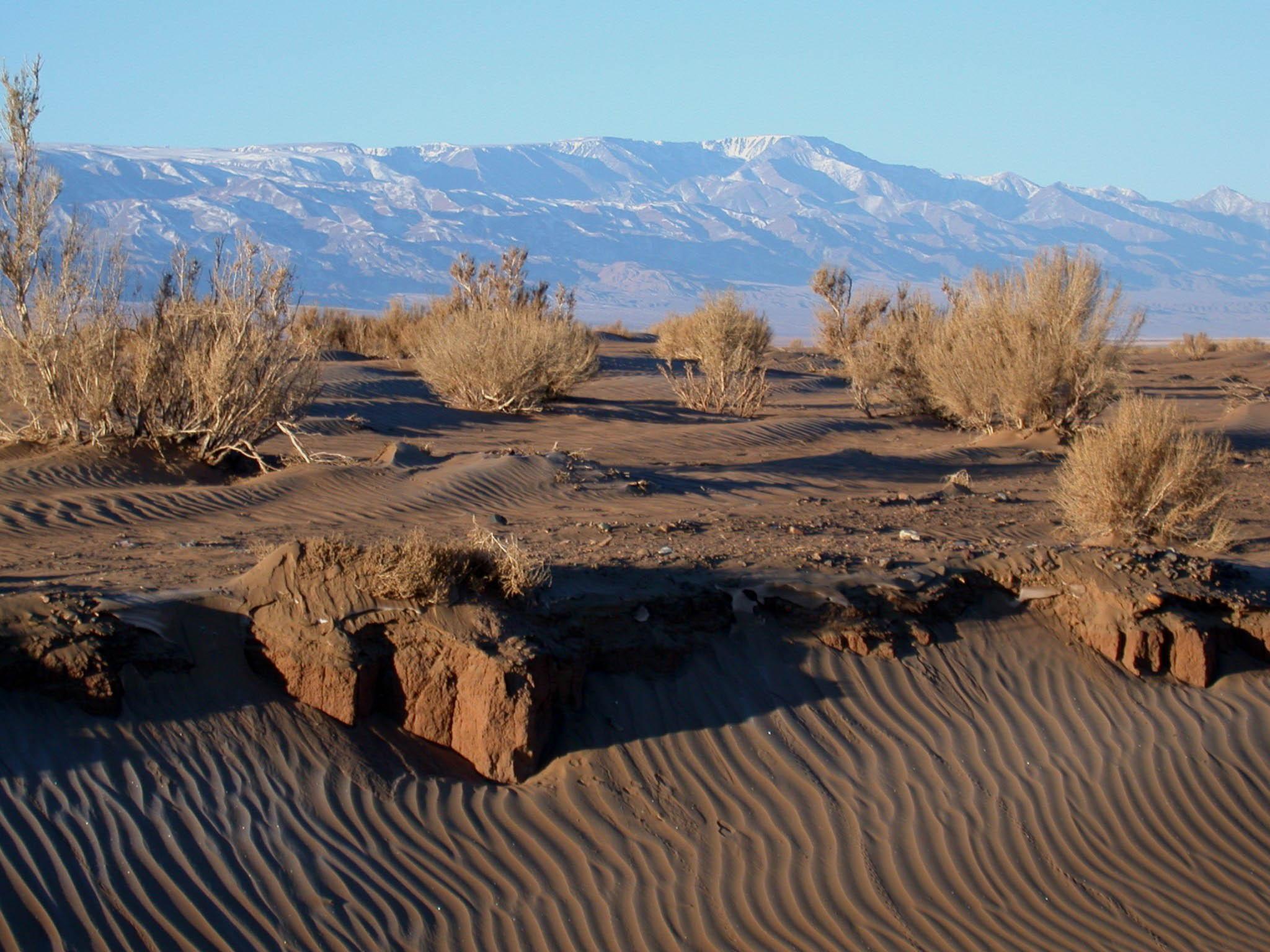 Безводная пустыня Гоби в Монголии
