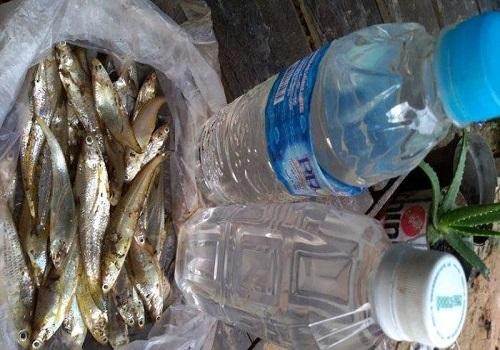 Nelayan kembali menemukan ikan mati di Sungai Satui, Desa Sungaidanau, Kecamatan Satui, Tanahbumbu.