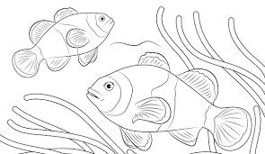 Kumpulan Gambar Dekoratif Ikan Hias Hd Terbaru Infobaru