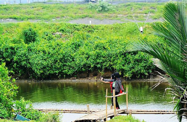 Pengunjung berselfie di Mangrove Congot, Kulon Progo