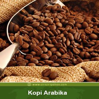 ciri ciri pohon kopi arabika
