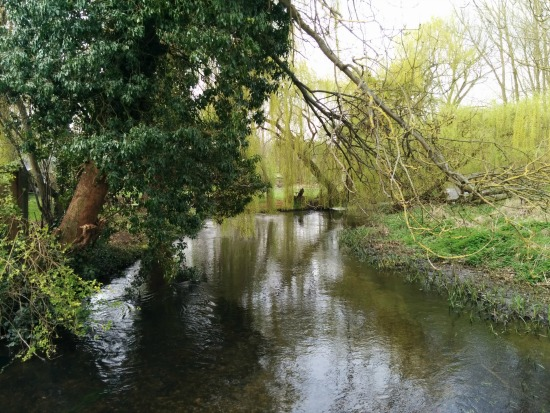 Picture of River Lea taken along Walk 38: Ayot Greenway South