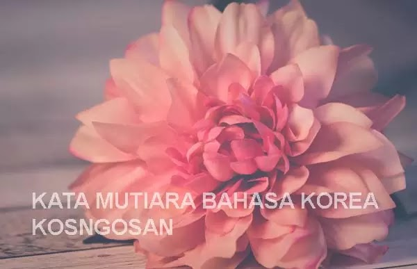 kata mutiara bahasa korea