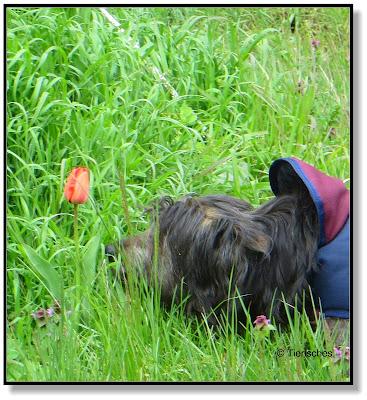 mit Hund im Wald