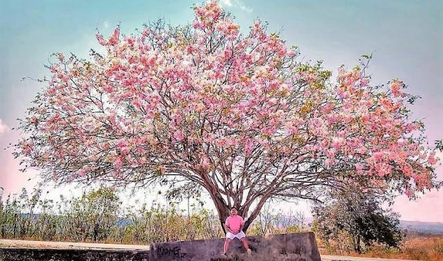 Sakura dan Puisi Lainnya