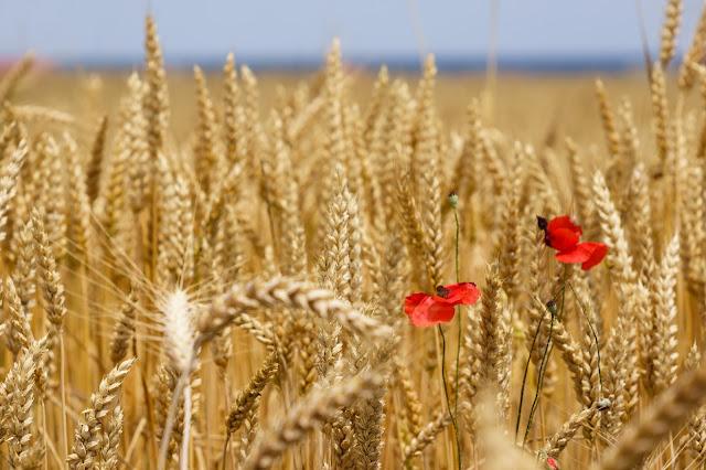 http://www.gafta.com/seminars/Transition-to-New-Grain-Crop-in-the-Black-Sea/36177