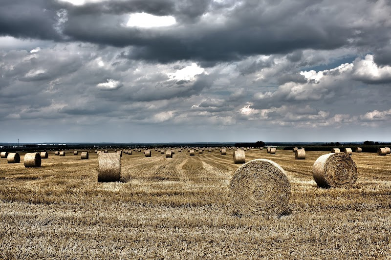 Making Money From An Agricultural Business