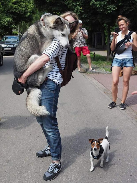 16 chú chó hèn nhát không sợ trời, không sợ đất, còn lại thì cái gì cũng sợ