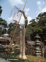 Supported tree by a pond - Kenroku-en Garden, Kanazawa, Japan
