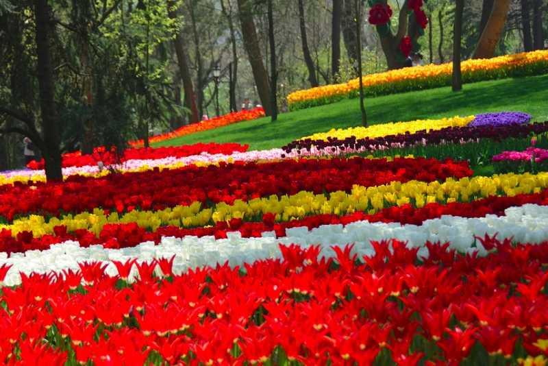 Tulipanes en el Parque Emirgan