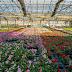 Nederlandse bloemenkwekers in arme landen beloven verbetering milieu en mens
