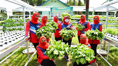 Persit KCK Koorcab Rem 071 Panen Sayur Hidroponik Dukung Ketahanan Pangan di Masa Pandemi