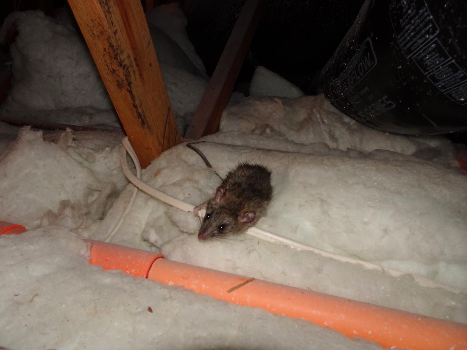 Rodent Damage
