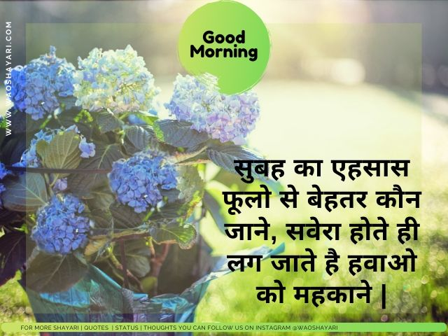 good morning shayari in hindi photo, good morning wallpaper shayari
