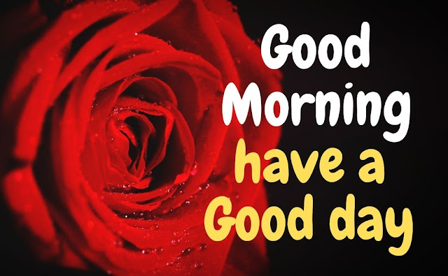 Good Morning have a Good day Red Rose Image