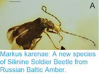 https://sciencythoughts.blogspot.com/2018/07/markus-karenae-new-species-of-silinine.html