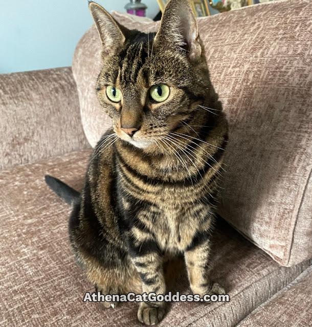 tabby cat on sofa