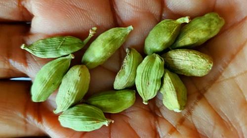 Cardamom Elettaria cardamomum