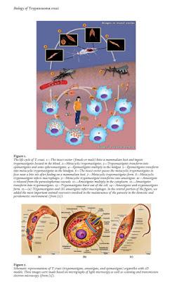 [FREE PDF EBOOK]Biology of Trypanosoma cruzi