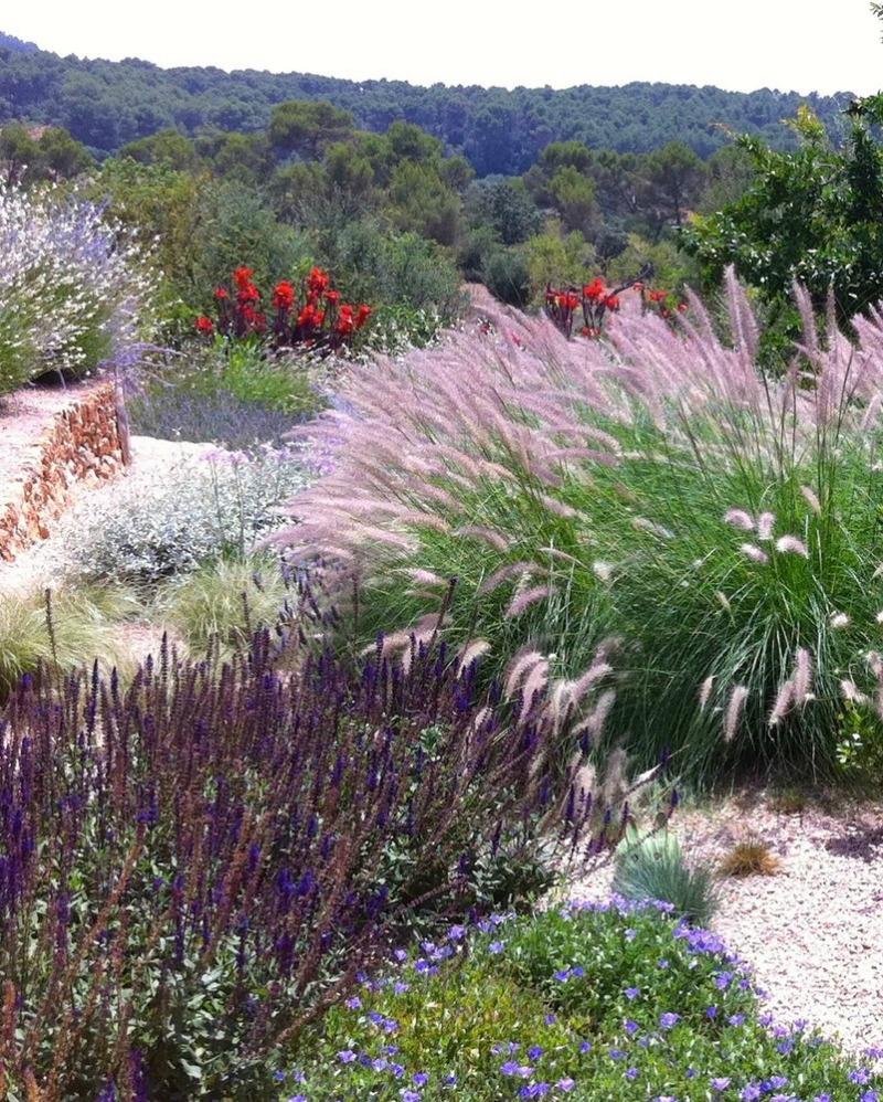 El jard n mediterr neo ecoeficiente guia de jardin Plantas jardin mediterraneo