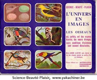 L'univers en images, les oiseaux