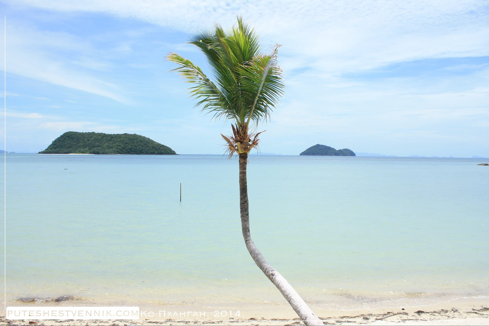 Пальма у моря в Таиланде