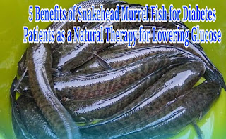 5 Benefits of Snakehead Murrel Fish for Diabetes Patients as a Natural Therapy for Lowering Glucose