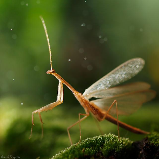 صور بعض الحشرات سبحان الله 6018519268_5df3cfe8f