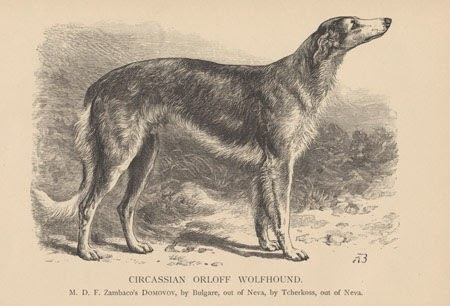 Circassian Orloff  Wolfhound