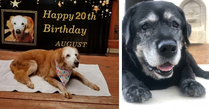 20 Wholesome Photos Of Senior Good Boys