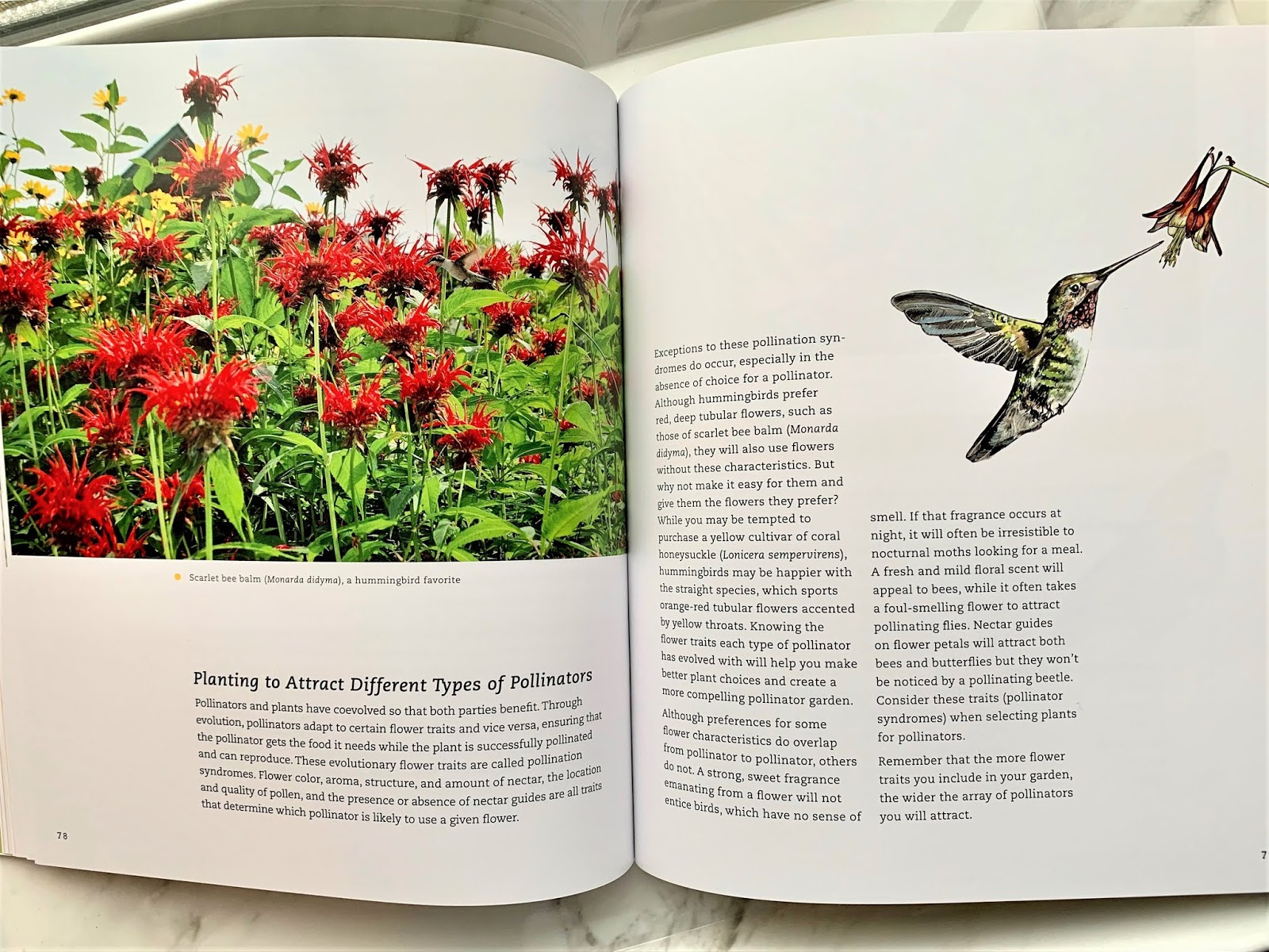 a look inside the Pollinator Victory Garden book #ad