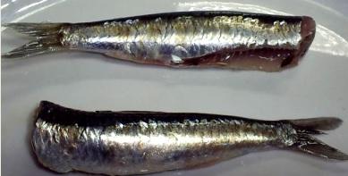 Foto de anchovetas trozadas