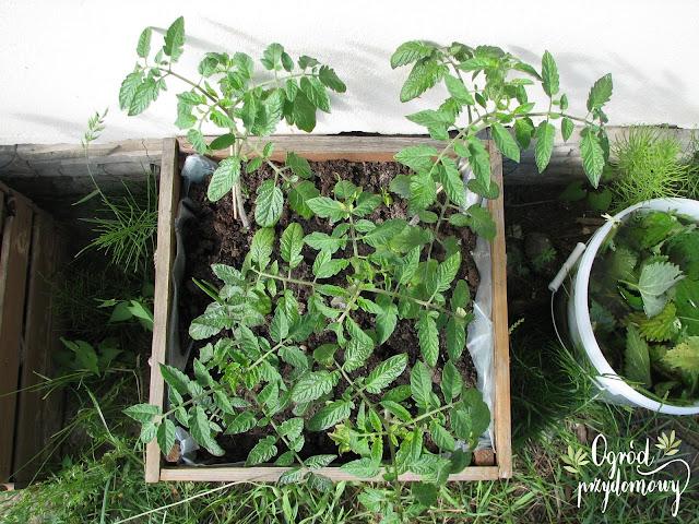 ogród przydomowy, projekt warzywnik