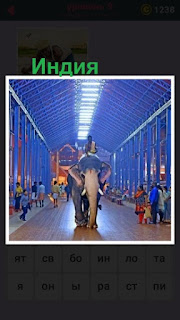 655 слов в Индии на слоне в высоком коридоре идет слон 9 уровень