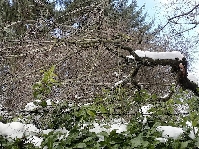 Tree check for snow damage!