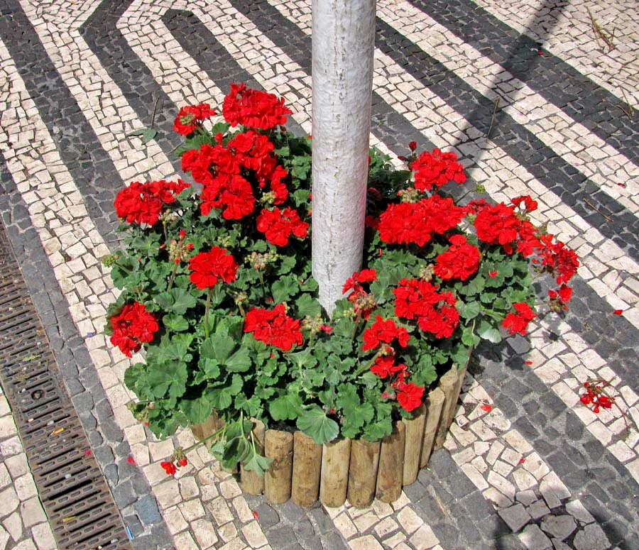 red flowers in town