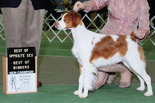 New Grand Champion - GCH Hurricane's Bet'n on the Ace
