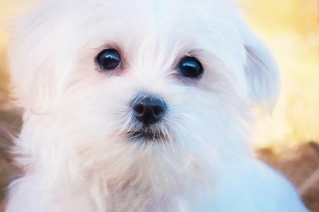 Najważniejsze informacje przed kupnem psa