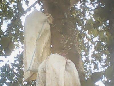 https://tipspetani.blogspot.com/2019/05/cara-mengatasi-buah-nangka-busuk-di.html