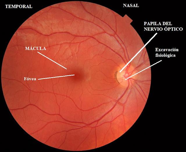 fondo de ojo, oftalmoscopia