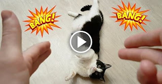 Cat Plays Dead After Being Shot With Finger Gun!